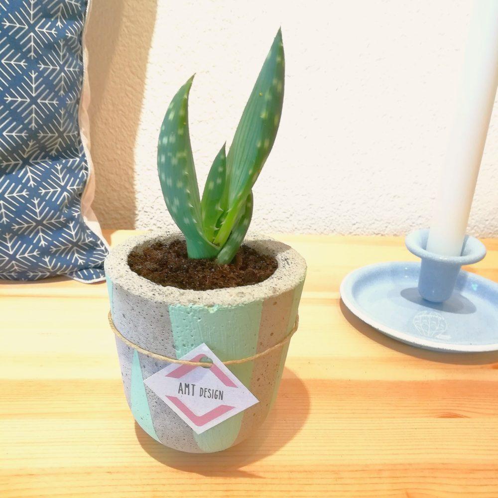béton décoratif, planter, ciment, béton, pot à plantes, plantes, cactus, succulente, amt desing, le point virgule, créateur